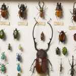 13e wallace-collection-beetles-nocurve_21565_2